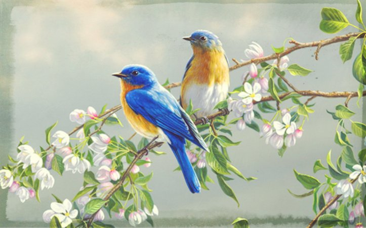 flowers-and-birds-hd-wallpapers